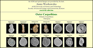 Anna Waskowska Foraminifera collection
