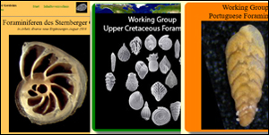 Foraminifera Projects
