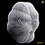 Endothyra baileyi, Spergen Hill, Washington County, Indiana, early Visean, Mississippian