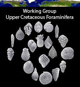 Working Group Upper Cretaceous