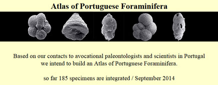 Atlas of Portugues Foraminifera