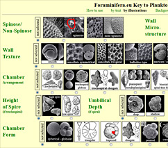 Key to Planktonic Species